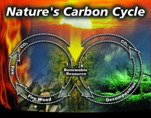 Carbon cycle ICC-RSF